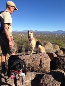 Dog Training and Weight Loss