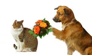Dog Training - and Weight Loss - is about Forgiveness